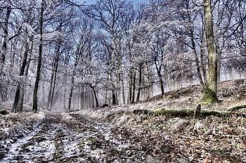 Mrazivé Karpaty