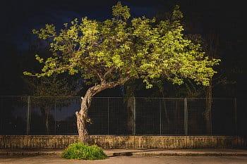 Street bonsai