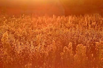 Zlatý soumrak léta