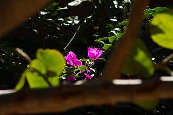 Skrytý květ