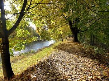 Když šustí listy stromů pod nohama
