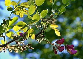 Pupeny a květy