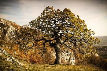 podzimní bonsai