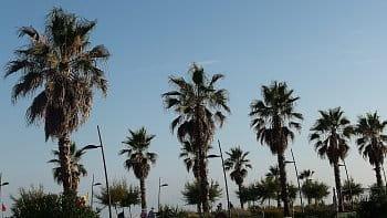 Palma vedle palmy
