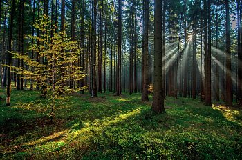 Ráno v lese