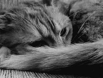 Kočičak