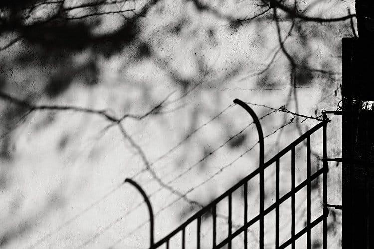 Před plotem, za plotem ...