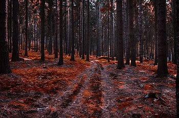 Krvavý les