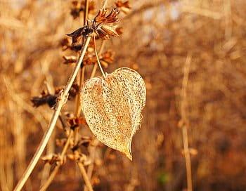 Podzim zbarvený do hněda
