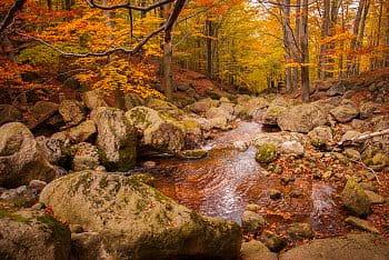 Podzimní bučiny