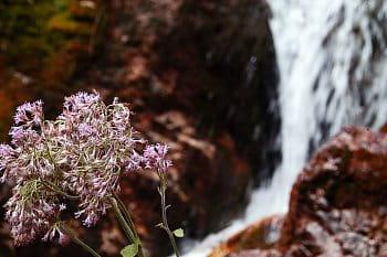 Květina u vodopádu
