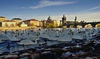 Podzimní podvečer u Vltavy