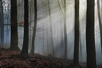Les v ranní mlze