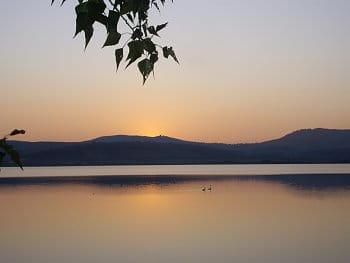 labutě na večerní vodě