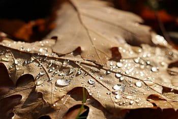 Podzimní slzy