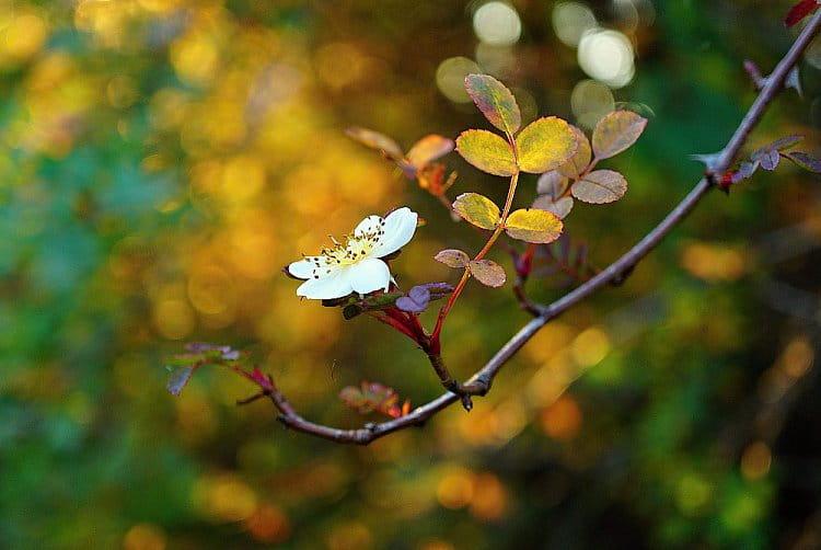 Příroda je zázrak