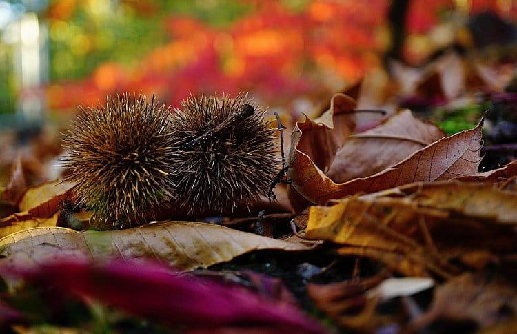 Podzimní zbarvení