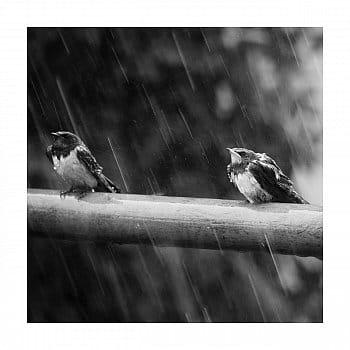 V dešti