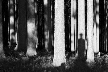 O stromech a lidech