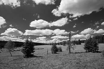 Stromy a mraky