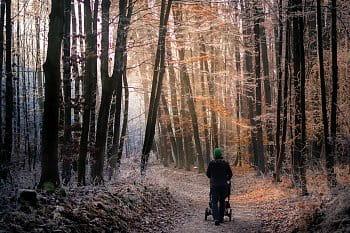 Pronikající světlo lesem