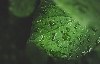 Ranní déšť