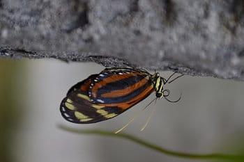 Detail motýla