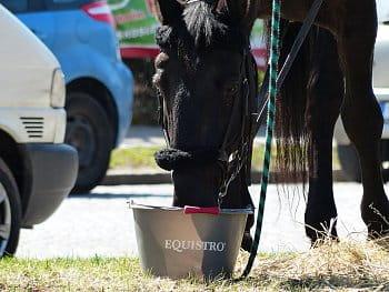 Někdo napájí své koně benzínem - někdo zase vodou