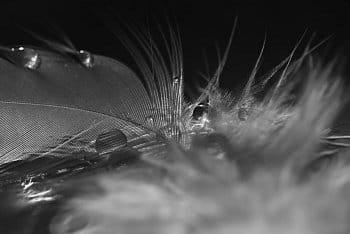 hnízdo kapek