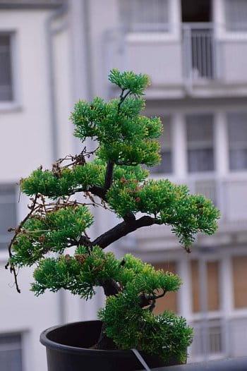 Balkonová rostlina