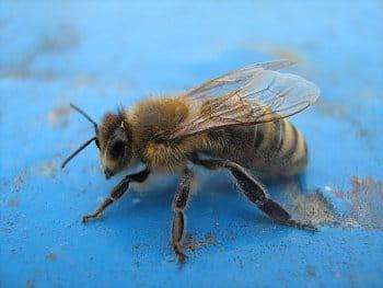 Sestřenice včelky Máji