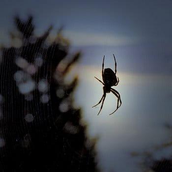 Pavouček pro štěstí