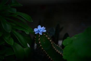 Osamělý kaktus