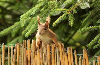 Za plotem