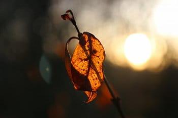 Hra zapadajícího sluníčka