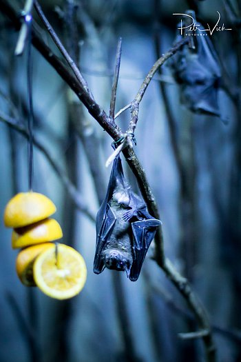 Bat & lemon