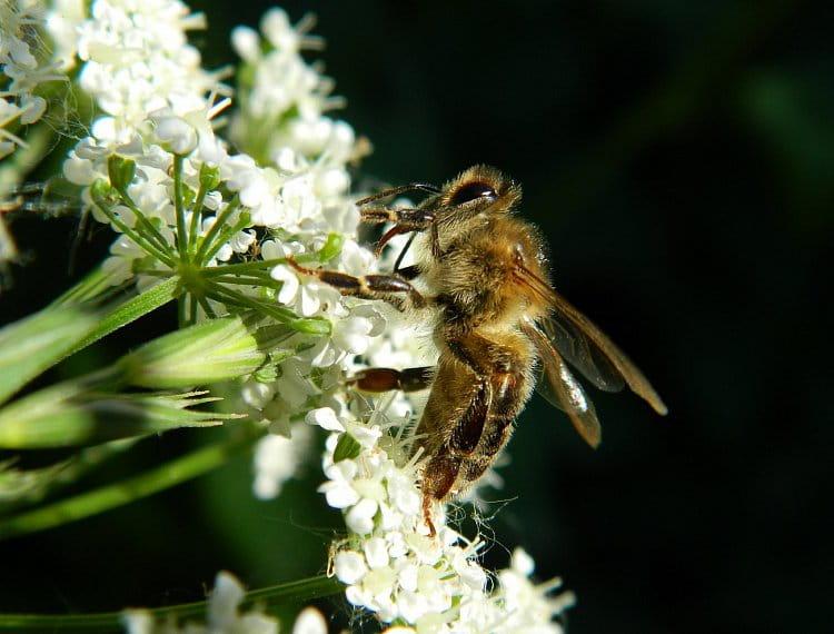 včelí oběd