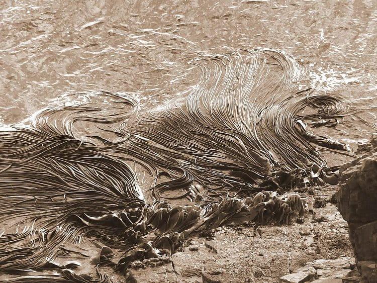 Vlasy oceánu