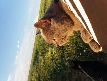 Kočičí výlet