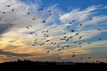 Nebe a křídla