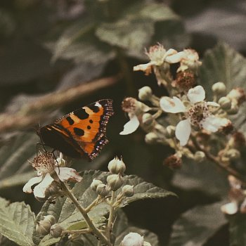 Butterly efect