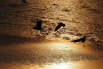Podvečerní rybník