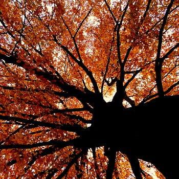 ...barvy podzimu...