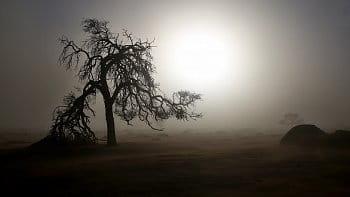 Ráno v poušti Namib