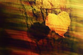 Podzimní vzpomínky