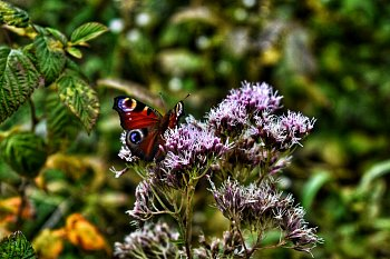 Motýlí krása.