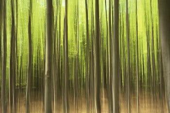 V lesním rytmu
