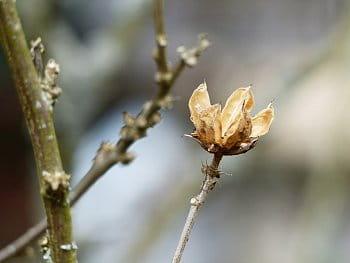 Podzimní krása, focená na jaře