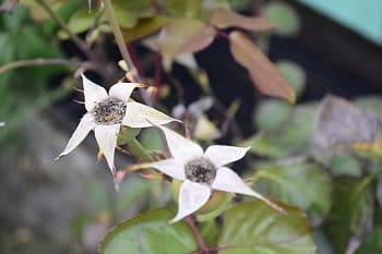 podzimní květina