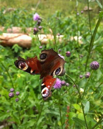 Motýlí řádění